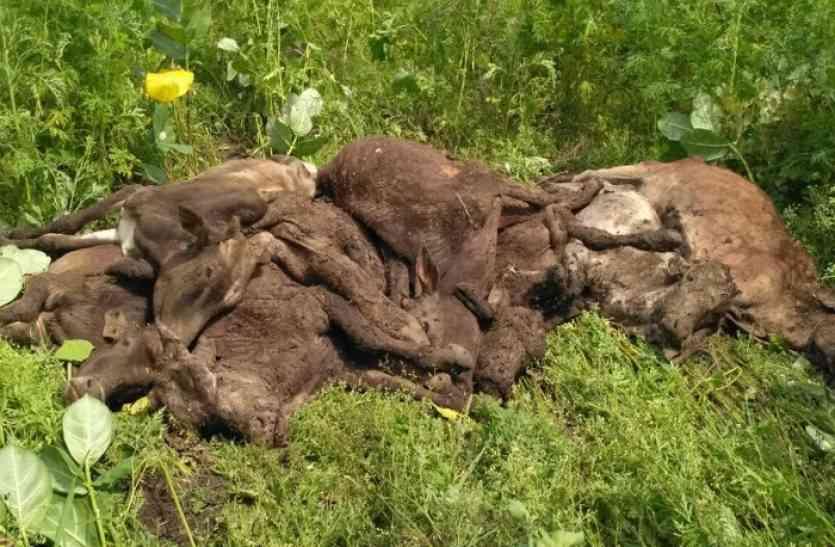 सैकड़ों गायों की मौत मामले में सीएम ने दिए सभी गौशालाओं की जांच के आदेश