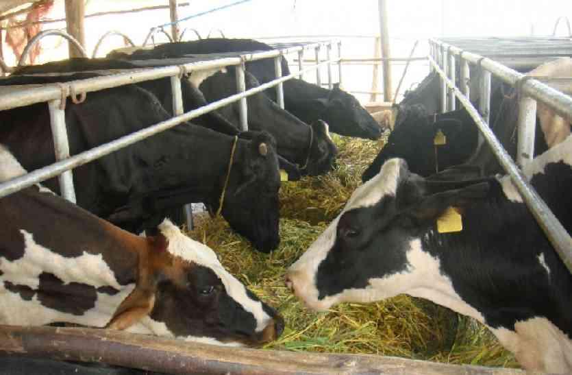 dairy farm: अवैध डेयरियों का मामला 19 वर्ष बाद अब एनजीटी के हवाले, ये होगा असर