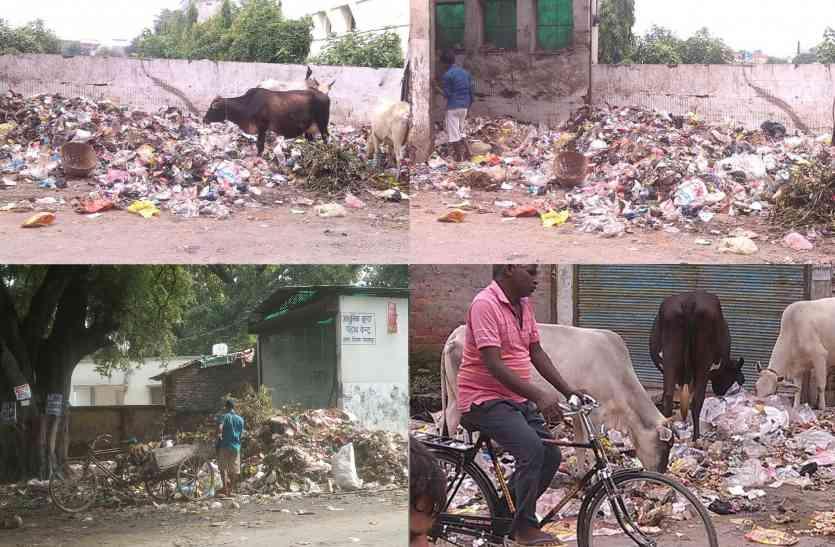 बीजेपी के स्वच्छता अभियान को मुंह चिढ़ा रही मुख्यमंत्री योगी के शहर की गंदगी