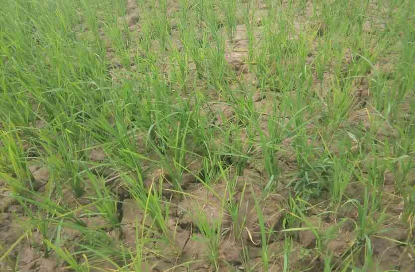 'किसानों को कर्ज मुक्तकर स्वामी नाथन आयोग की रिपोर्ट लागू करो'