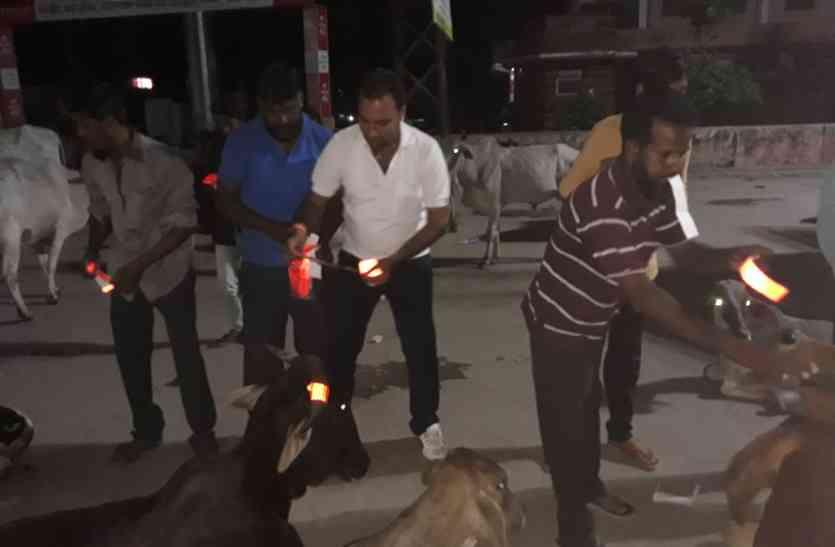 #PATRIKA CAMPAIGN : देर रात क्या हुआ गायों के साथ कि सब देखते रह गए