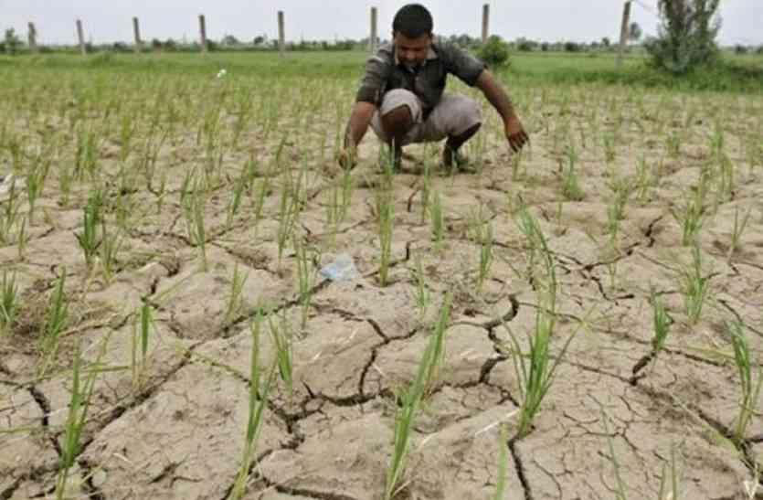 प्रदेश में सुस्त मानसून ने बढ़ाई किसानों की चिंता, मध्य भारत के राज्यों में हुआ सक्रिय