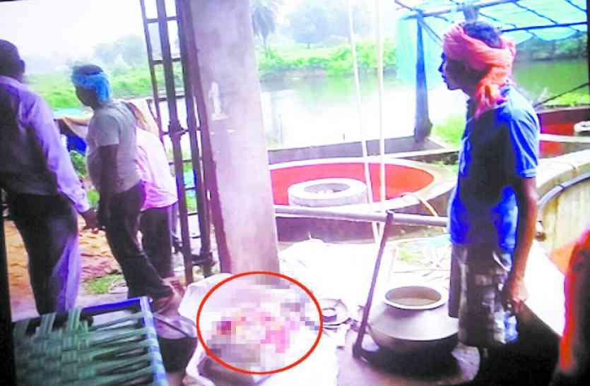 OMG! कछुए का शिकार कर बेच रहे थे मांस, वन विभाग ने दो को दबोचा
