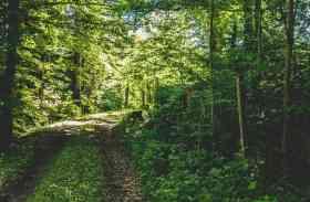 इनका जंगल, इनका राज- यहां जंगलों की रक्षा के लिए जान तक दे सकते हैं लोग और जंगल काटने वालों को देते हैं सजा