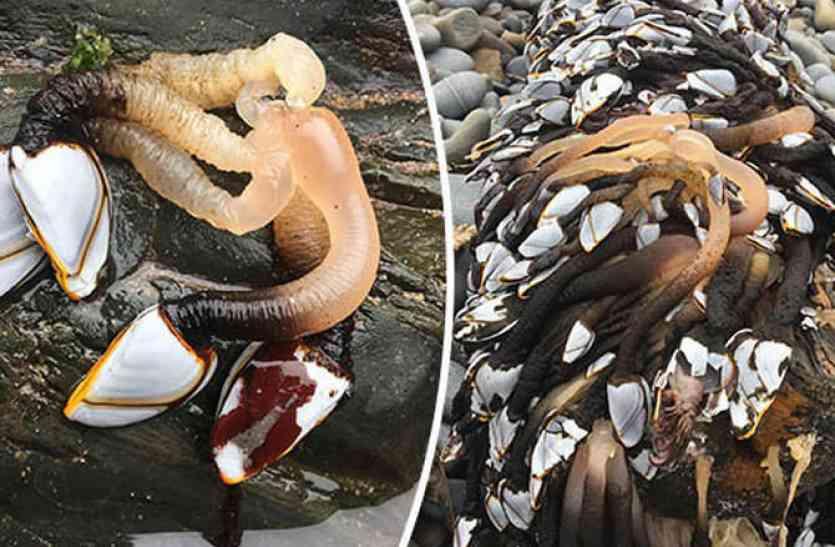 समुद्र तट पर देखा गया ये रहस्यमयी जीव, सामने आई हैरान कर देने वाली सच्चाई!