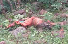 जंगल से आ रही थी अजीब-सी बदबू, नजदीक जाकर देखा तो मिली महिला की अर्धनग्न लाश
