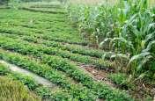 video : भटेवर में इस वजह से पहले बरसात और अब सीवरेज के पानी से बर्बाद हुई किसानों की फसलें