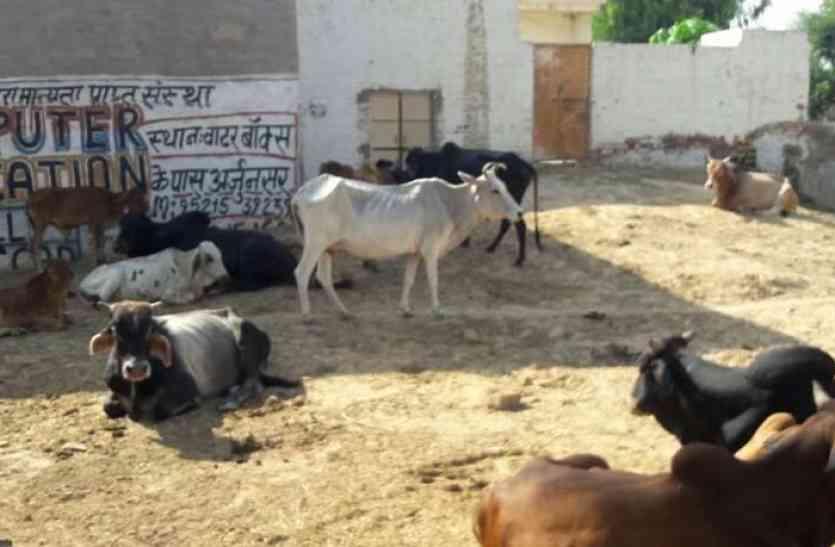 गांवों में कैद हुआ गोवंश, भूख से दम तोड़ रहे हैं पशु