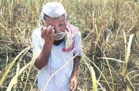 योगी आदित्यनाथ को किसान भेजेंगे ऐसी चीज जो आज तक किसी न भेजी होगी