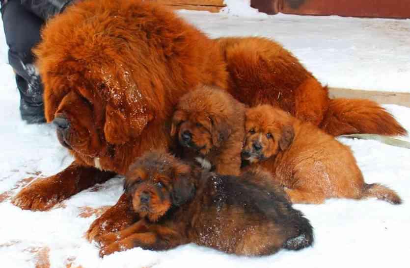 करोड़ों की कीमत वाले कुत्ते यहां सड़कों पर घूम रहे हैं लावारिस, इस कीमत में एक छोटा हवाई जहाज खरीदा जा सकता है