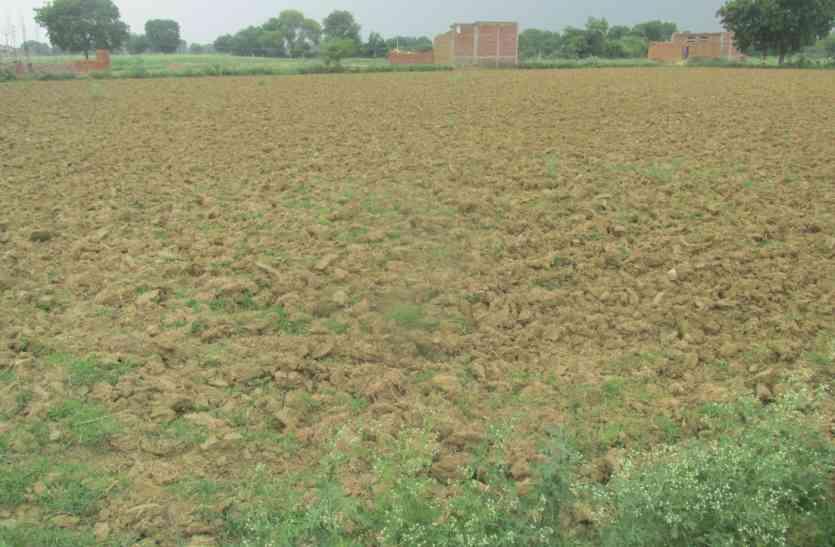 गेहूं की ये फसल करेंगी किसानों को मालामाल