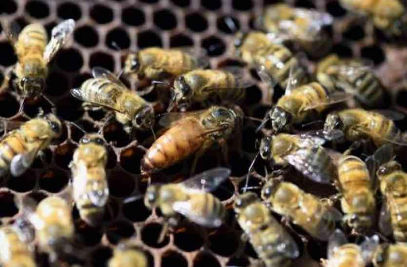 इधर काटा मंत्रीजी ने रिबन, उधर कर दिया मधुमक्खियों ने जबरदस्त अटैक