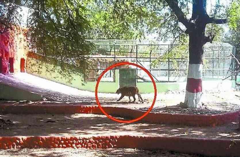 जापान हमसे ले रहा शेर, बदले में दे रहा बुलेट ट्रेन