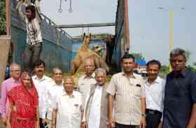 33 ऊंटों को कत्लखाने से बचाने वाले श्रीश्रीमाल का किया सम्मान
