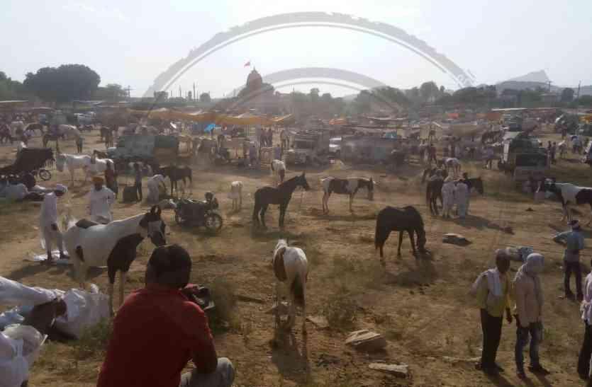 सज धज गए हैं गधे और घोडे, जयपुर में दो दिन चलेगा अनोखा गर्दभ मेला