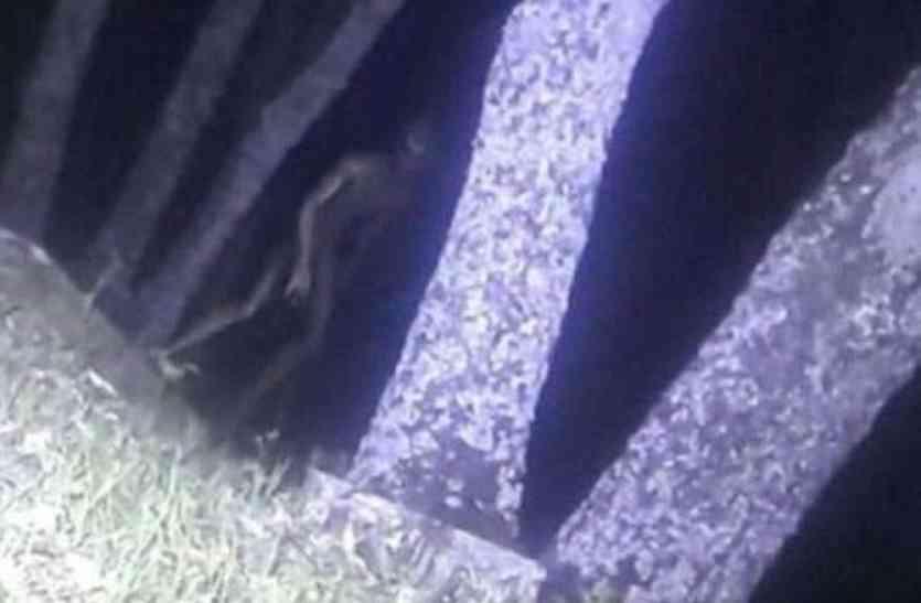 सच में देखा गया एलियन, पुलिस ने किया अब तक का सबसे बड़ा दावा, पुलिसकर्मी ने ही खींची तस्वीरें!
