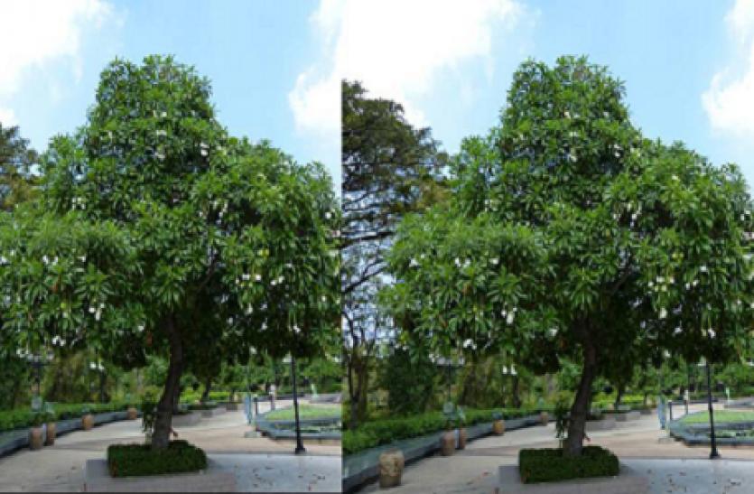 किंग कोबरा से कई गुना ज्यादा खतरनाक है ये पेड़, VVIP के जैसी इस पेड़ को दी जाती है सुरक्षा!