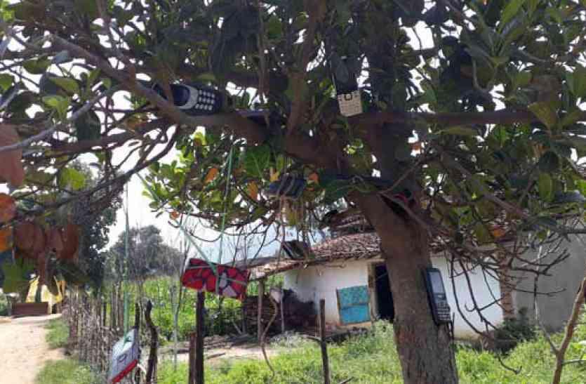 इस पेड़ पर आपको फल नहीं लटकते मिलेंगे मोबाइल! वजह जानकर आप सोचने पर हो जायेंगे मजबूर