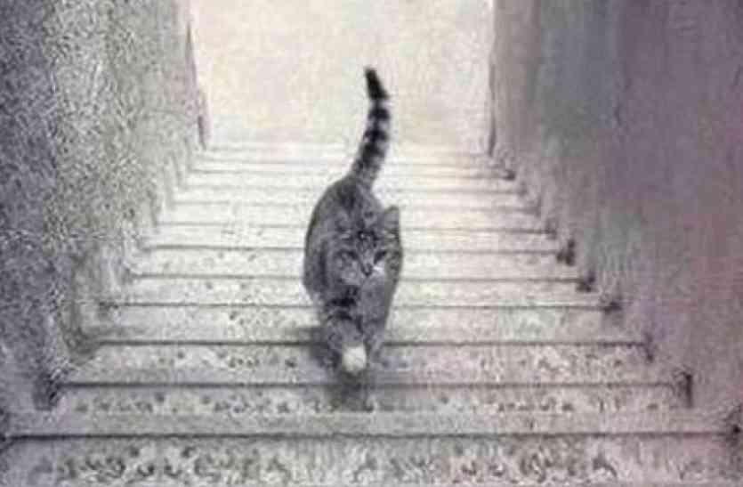 इस बिल्ली ने पूरी दुनिया का दिमाग कर रखा है ख़राब! ये ऊपर जा रही है या नीचे? ज्यादातर लोग खा रहे हैं धोखा
