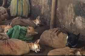 OMG: कुत्तों का मांस खाने के लिए उन्हें बांधकर ले जाने की तस्वीरें हुई वायरल