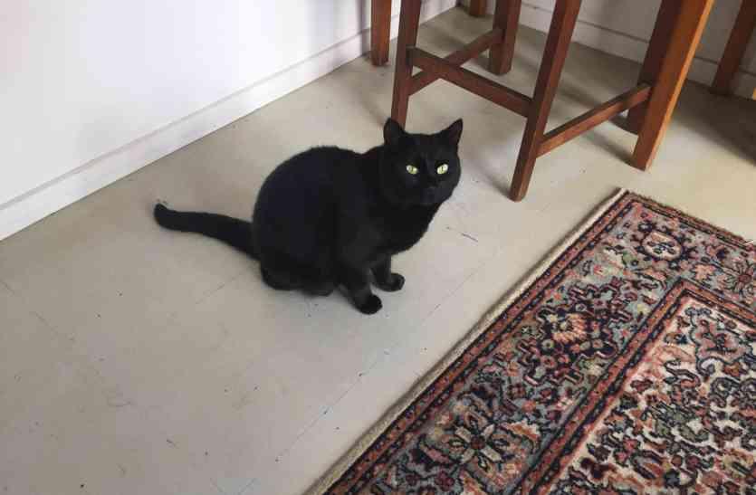 गलती से पडोसी की बिल्ली को अपने घर ले आई महिला, लेकिन उसके बाद जो हुआ वो हैरान कर देगा!