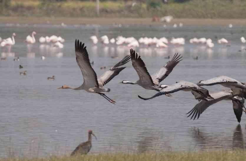 #udaipurbirdfestival   उदयपुर में होने वाले बर्ड फेस्टिवल में इस बार होगा कुछ ऐसा कि देखते रह जाएंगे लोग.. जानिए क्या होगा खास