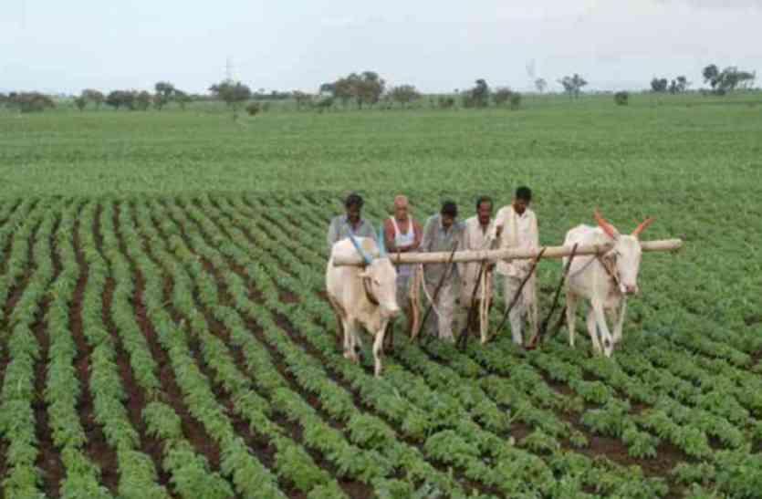 किसानों की सुध लेना भूली प्रदेश सरकार- रबी फसलों की सुरक्षा को नहीं मिला अब तक फसल बीमा