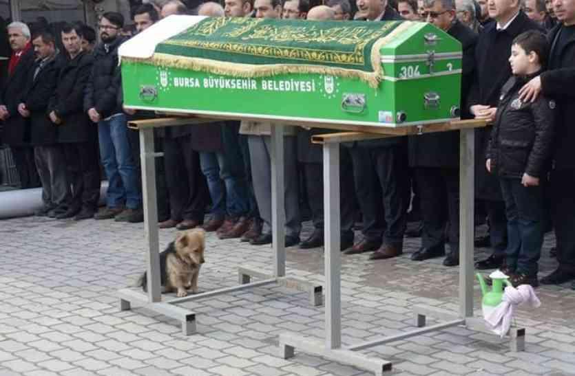 मालिक की मौत के बाद टूट गया ये डॉगी, ताबूत के पास ही खड़ा रहकर रोता रहा, अब उसकी कब्र पर जाता है हर रोज!