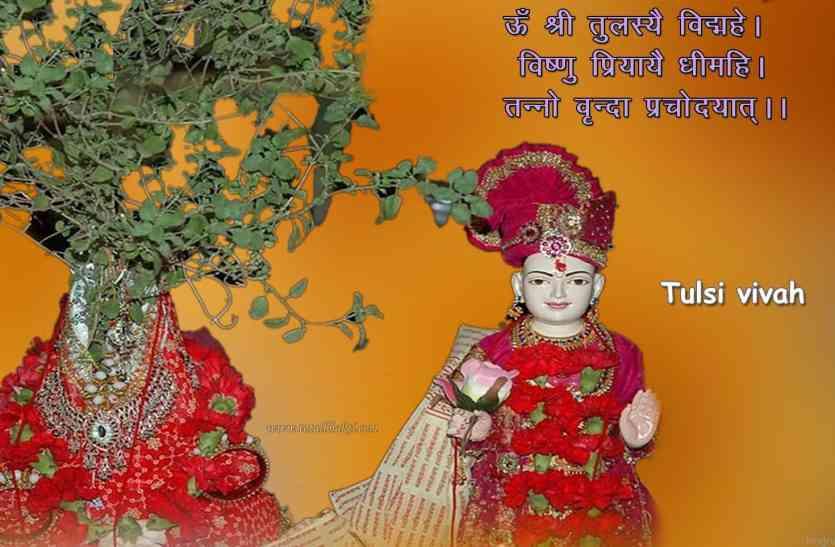 Tulsi Vivah Vrat Katha And Puja Vidhi News In Hindi Tulsi Vivah Vrat Katha And Puja Vidhi ऐस कर म त त लस क व व ह ज न य व द क व ध और महत त व Patrika News