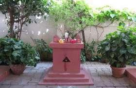 Tulsi Vivah : कार्तिक मास में तुलसी पूजन की खास महत्ता क्यों?