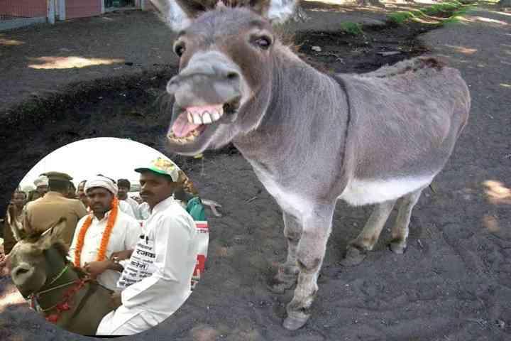 Nomination on Donkey