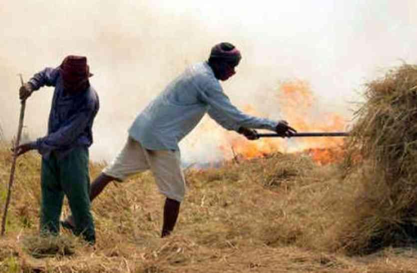 प्रदूषण का कहर, अब नहीं जला सकेंगे भूसा, राजस्थान समेत चार राज्यों पर लगाई रोक