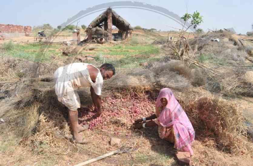 समर्थन मूल्य खरीद में फंसे राजस्थान के किसान, जो बेचा...उसका भुगतान अटका