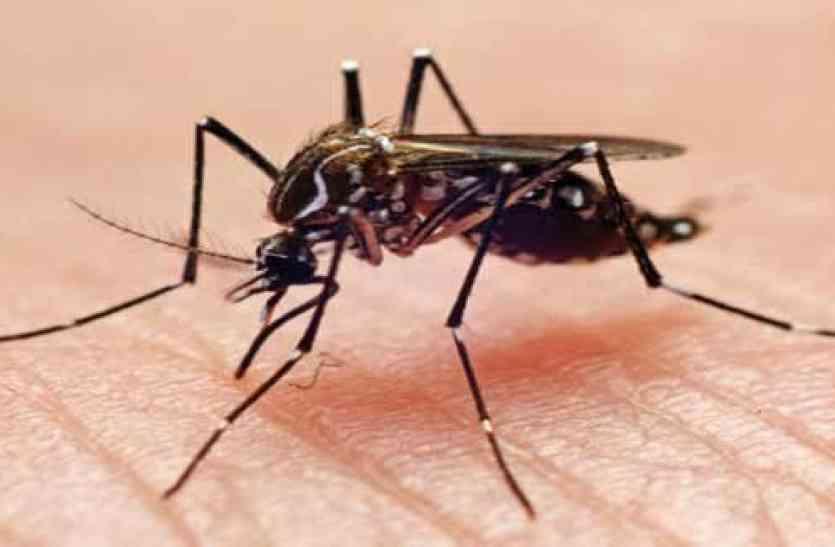 पश्चिम बंगाल में डेंगू से केवल 19 लोगों की ही हुई मृत्यु