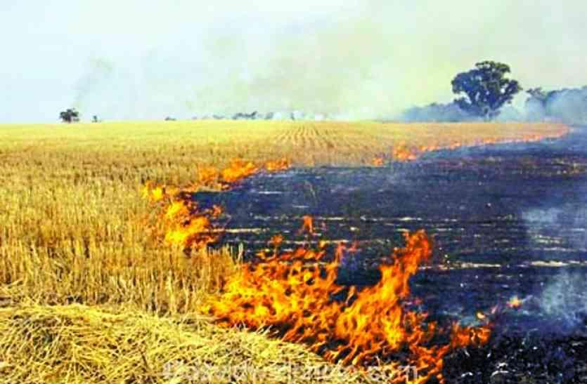 दिल्ली प्रदूषण की आंच छत्तीसगढ़ तक: पैरा नहीं जलाने पर किसानों को मिलेंगे एक हजार
