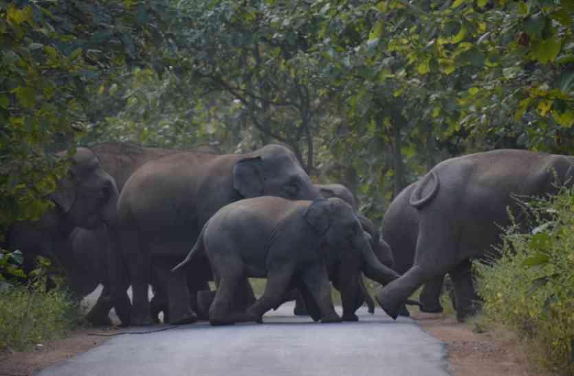 लकड़ी काट रहे थे ग्रामीण, हाथियों को देख कर कुल्हाड़ी छोड़ भागे, गड्ढे में गिरने से एक ग्रामीण घायल