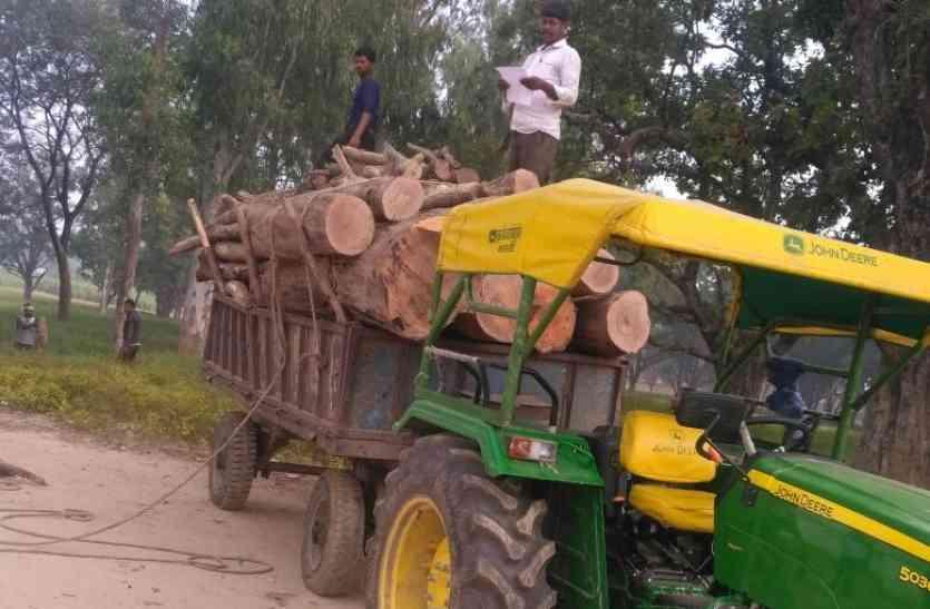 प्रिसिंपल ने कटवा दिये लाखों के पेड़, वन विभाग ने साधी चुप्पी