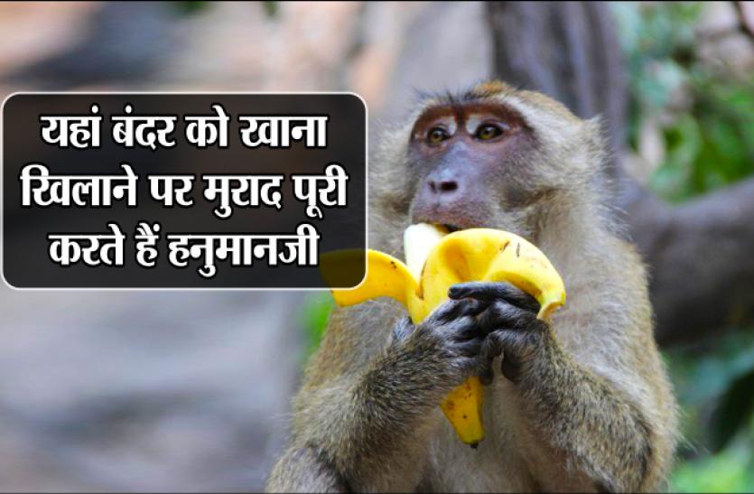 MP के इस स्थान पर हनुमानजी खुद लगाते हैं दरबार, बंदरों को खाना खिलाने पर पूरी होती है मुराद