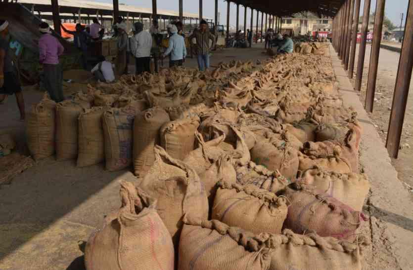किसानों को 1100 रुपए क्विंटल में बेचना पड़ रहा बाजरा
