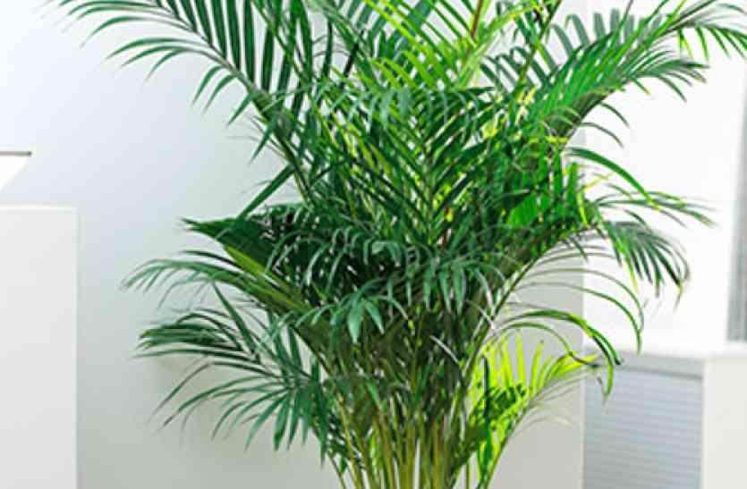 घर को बनाना चाहते हैं प्रदूषण मुक्त, तो जरूर लगाएं ये पौधे