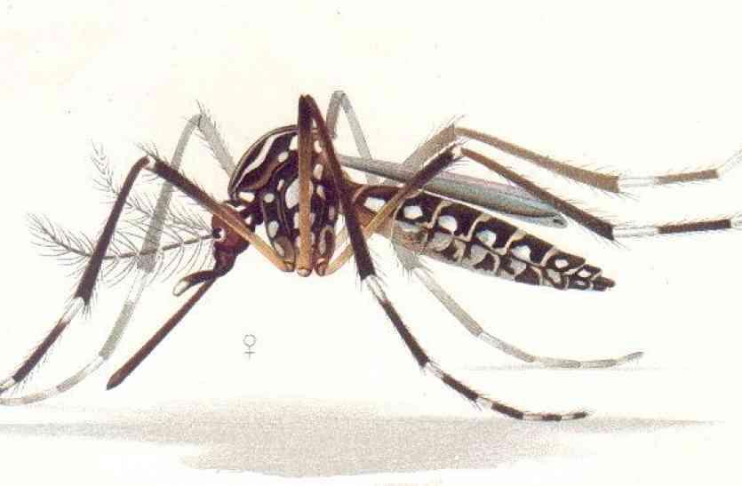 मच्छरों की भरमार, पूरे शहर में हो फोगिंग