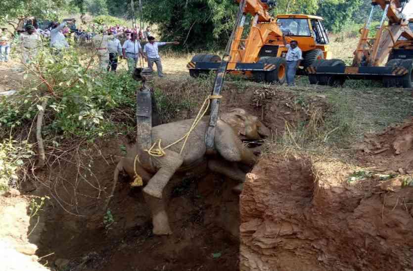 ऑपरेशन पद्मावती चलाकर 41 घंटे बाद कुएं से ऐसे निकाला गया हाथी, पिछला पैर है फ्रैक्चर- देखें Video