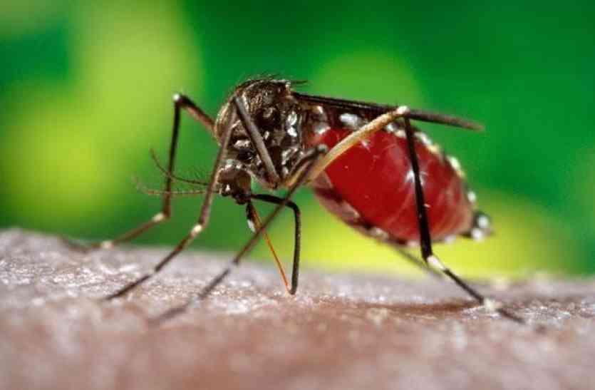 डेंगू व अज्ञात ज्वर से और 3 की मौत