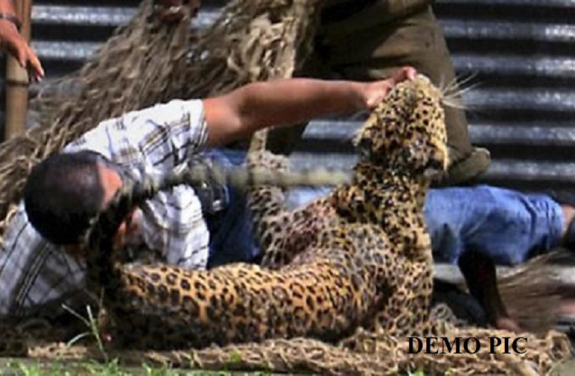 60 साल का बुजुर्ग फौजी परिवार की खातिर भीड़ गया तेंदुए से, जानिए फिर क्या हुआ