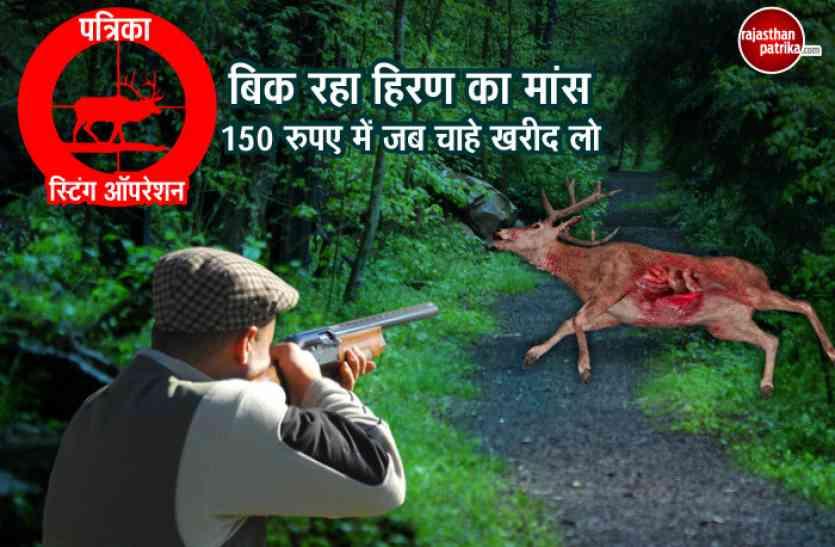 LIVE : राजस्थान में हिरणों पर सबसे बड़ा स्टिंग ऑपरेशन, शिकारियों से हुए कई चौंका देने वाले ये खुलासे