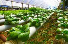 खेती में नवाचार और अनुसंधान के लिए वल्र्ड बैंक देगा 1100 करोड़, कृषि अनुसंधान परिषद ने मांगे कृषि विश्वविद्यालयों से प्रोजेक्ट