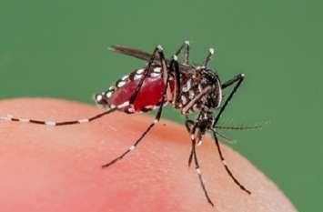 घड़साना क्षेत्र में अब तक डेंगू के 149रोगी मिले