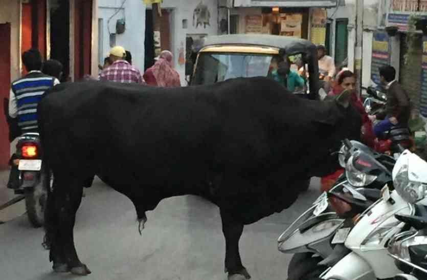 अब तो हद ही हो गई...उदयपुर में यहां घर में ही जा घुसा सांड, मची चीख पुकार