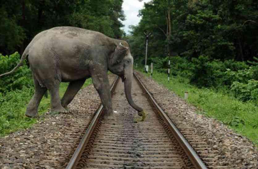 हाथियों की जान ले रही है भारतीय रेल, मधुमक्खी लेगी जान बचाने का कॉन्ट्रेक्ट