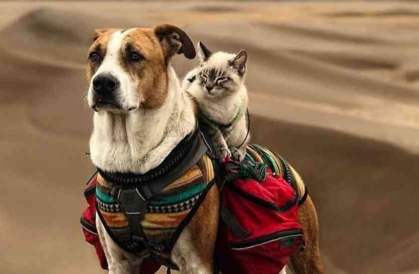 कुत्ते बिल्ली की इस जोड़ी से पीएम मोदी भी हो जाएंगे हैरान, बढ़ा सकते हैं विदेश यात्रा